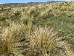 Salto del Tigre: Trekking hacia la Cascada (Vegetaciòn)- Provincia de Còrdoba- Argentina 2020.