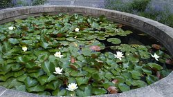 Tiny pond with water lilies in Banska Stianvica  Botanical Garden