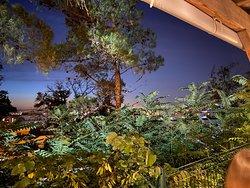 Belle vue sur Marseille au travers d'une végétation luxuriante