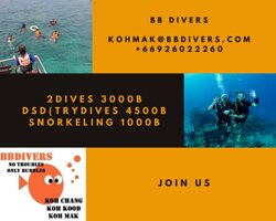 Join us on de beautiful day out on the sea! Diving 3000b DSD trydive 4500b Snorkeling 1000 We will bring you to 3 different reefs. The divers will make 2 dives. There will be a delicious lunch buffet, fruit, snacks, hot and cold drinks, guided diving/snorkeling and use of equipment and taxi pick op/drop off. This is all incl in the price!