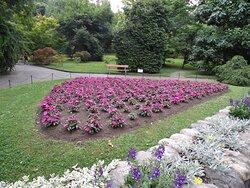 Alcuni fiori