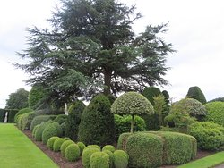 Great topiary
