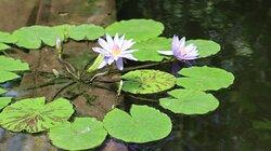 2020-07-19 (1)  Botanische tuin in Utrecht (M)