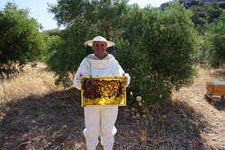 Holding a part of the hive!