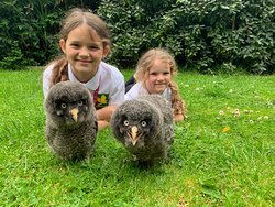 Xtreme Falconry at Dorset Falconry Park