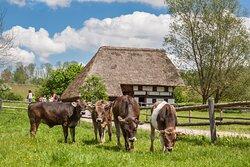 Schwabisches Bauernhofmuseum Illerbeuren (Swabian Farm Museum Illerbeuren)