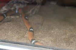 A serpent