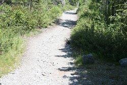 Birds along the trail