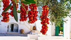 Pomodori appesi, tra cultura e tradizione