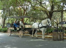 Savannah Carriage Tours