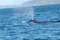 baleine avril 2020