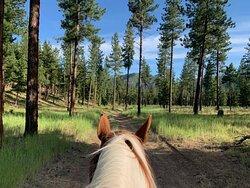 Alberton Horseback Riding