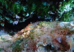 Salidas de buceo con Skualo Alcudia