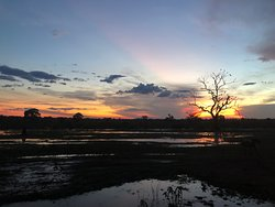 After the rains on the Pantanal