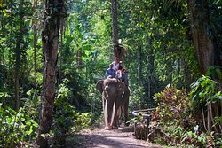 Jungle Safari Stroll