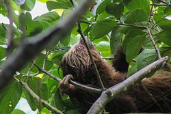 Sloth Tamarindo Tour