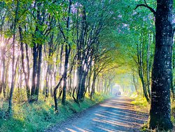 The Camino before the bar, with early morning rays.