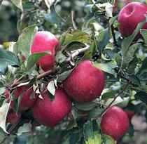 Applewood Farm