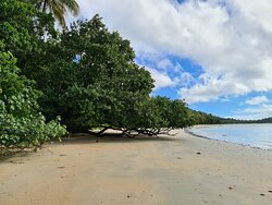 Great day out in the Daintree