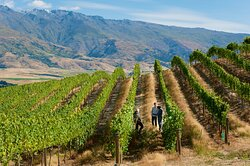 Appellation Wine Tours