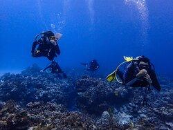 Dive with Cristina
