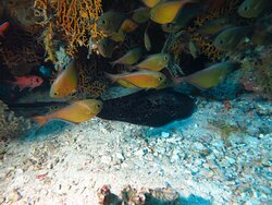 Hurghada diving course