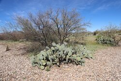More cacti, not in the circle