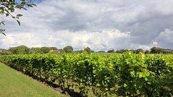 Fantastiskt vingård