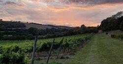 Daws Hill Vineyard