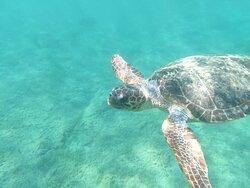 Turtles guaranteed!!