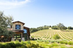 Halter Ranch Vineyard