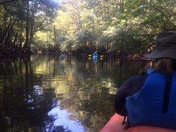 Awesome Kayaking in Congaree National Park