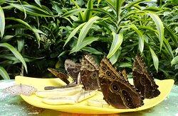 """Farfalle al """"banchetto"""""""
