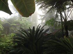 Botanical garden Rombergpark