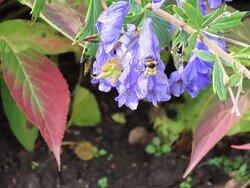Bee enjoying autumn flower