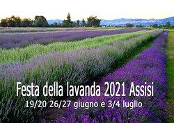 Il Lavandeto di Assisi giardino e vivaio