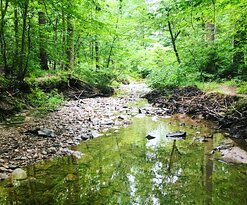 The stream bed in the woods