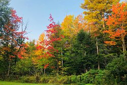 Beautiful foliage right in our back woods; as seen from one of our guest rooms.
