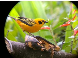 Want to see lots of beautiful and rare birds?
