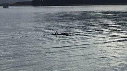 Wonderful way to see sealife upclose