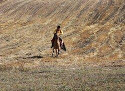 Qiangtang Prairie, Tibet