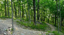 A singletrack switchback at the top of Hardy's Hill