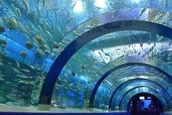 Aomori Asamushi Aquarium