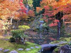 紅葉に包まれた庭園