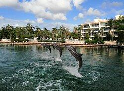 Delfines en el dreams