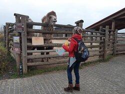 Верблюд. Зоопарк 12 месяцев.