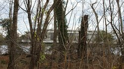 A view of the Kennedy Center through the woods