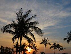 palmtress at sunset