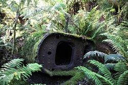 Nature reclaiming the Boiler