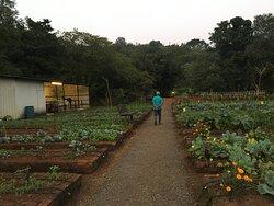 Their organic garden